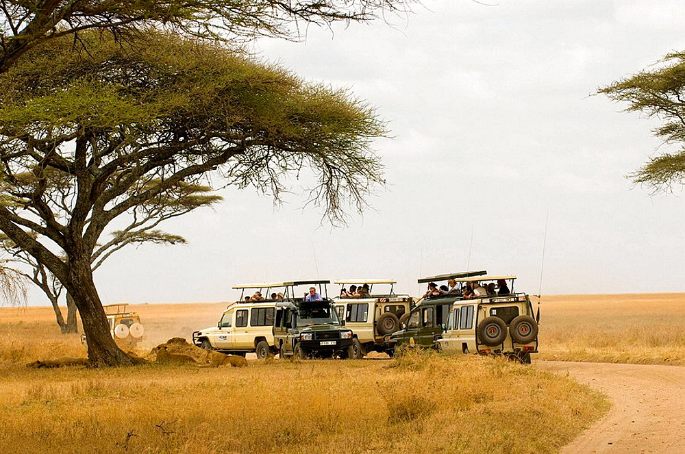 Tourists in safari vehicles observing a pride of lions, Serengeti National Park, Tanzania