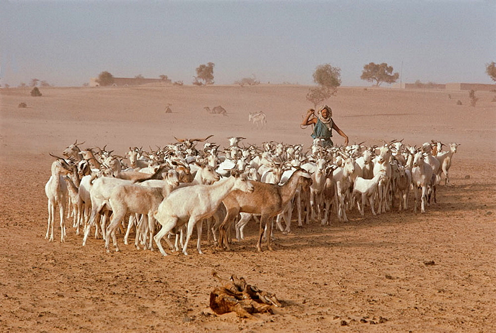 Nomade people, Mauritania.
