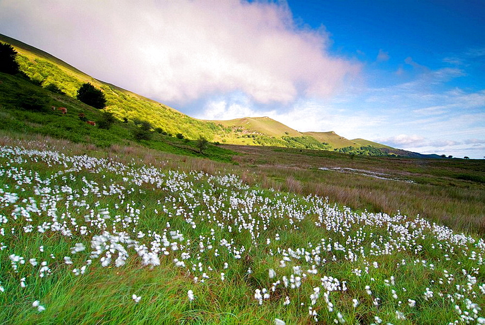 Spring in the Gorbea Natural Park, Vizcaya, Basque Country, Spain