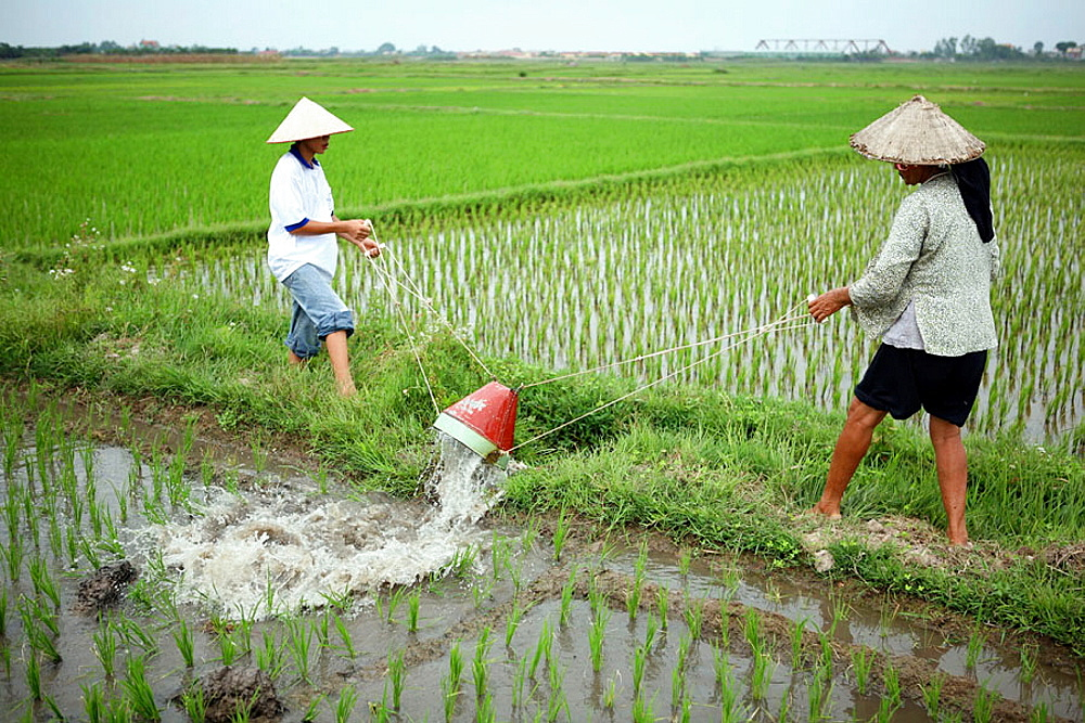 Irrigation system, Rice field, Hanoi, Vietnam