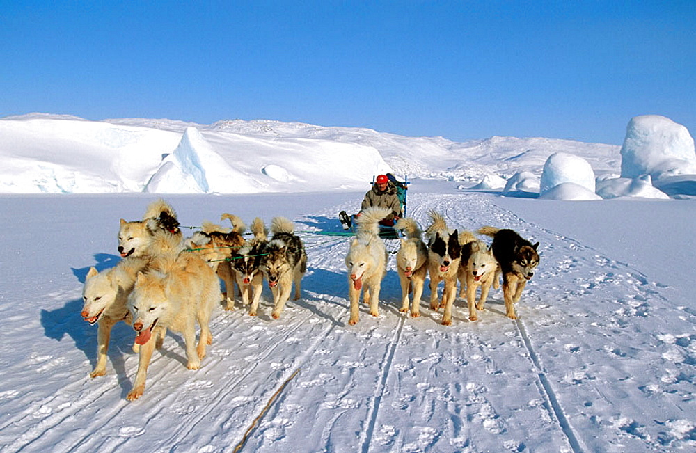 Dog sledge on Giant Kangia fjord, Disko bay, Greenland