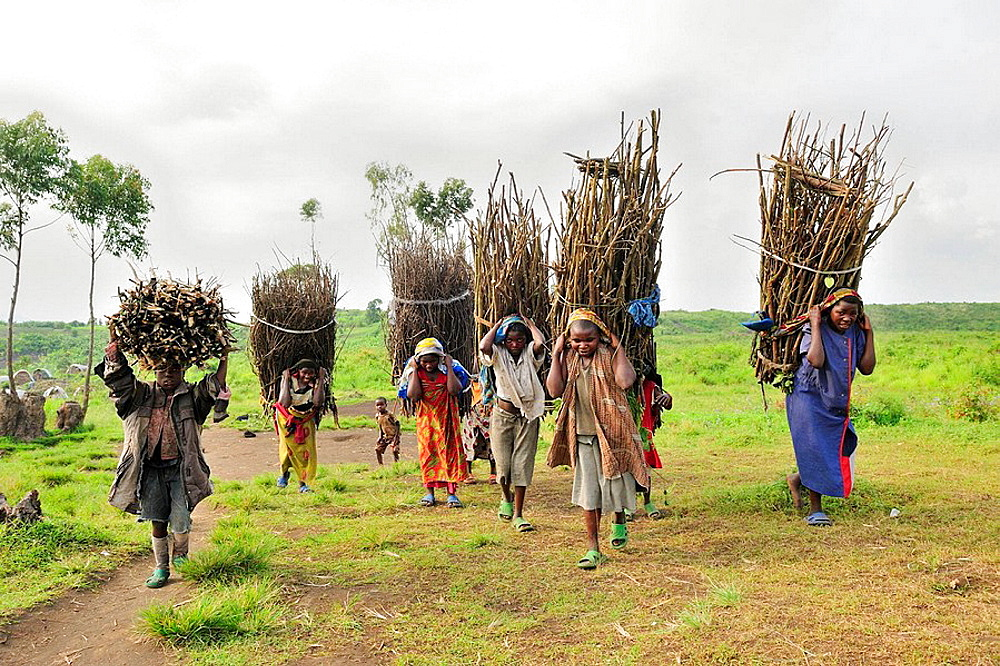 Women and children carrying faggots of branches for firewood, Goma, North Kivu, Democratic Republic of Congo, Africa
