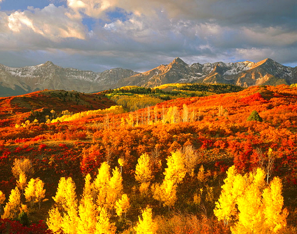 Oaks and Aspen trees in autumn, San Juan Mountains, Colorado, USA.