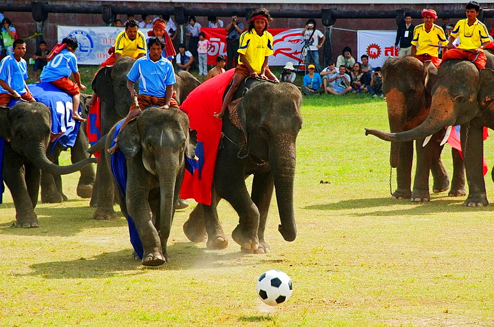 elephants playing football at the Surin Elephant Roundup in Thailand - 817-189768