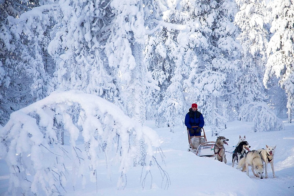 Finland, Lapland, sled - 817-198567