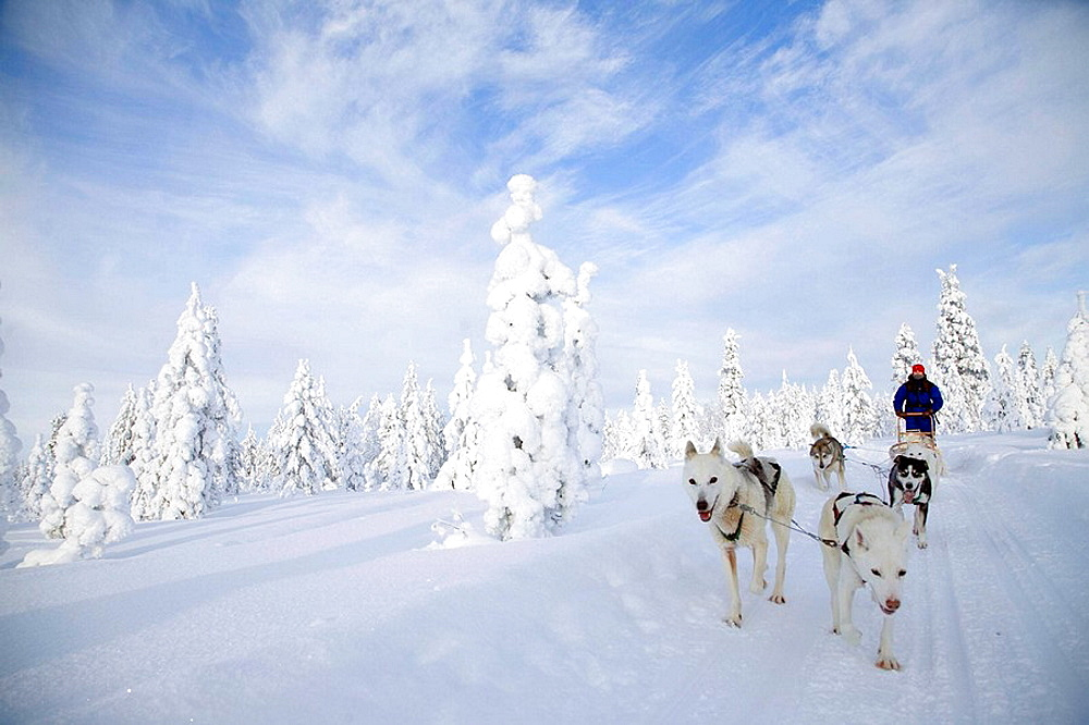 Finland, Lapland, sled