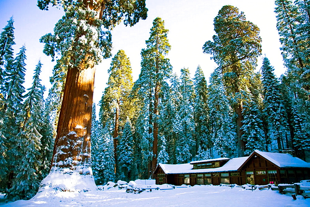 Ski lodge after fresh snow in  Sequoia National Park, California, USA