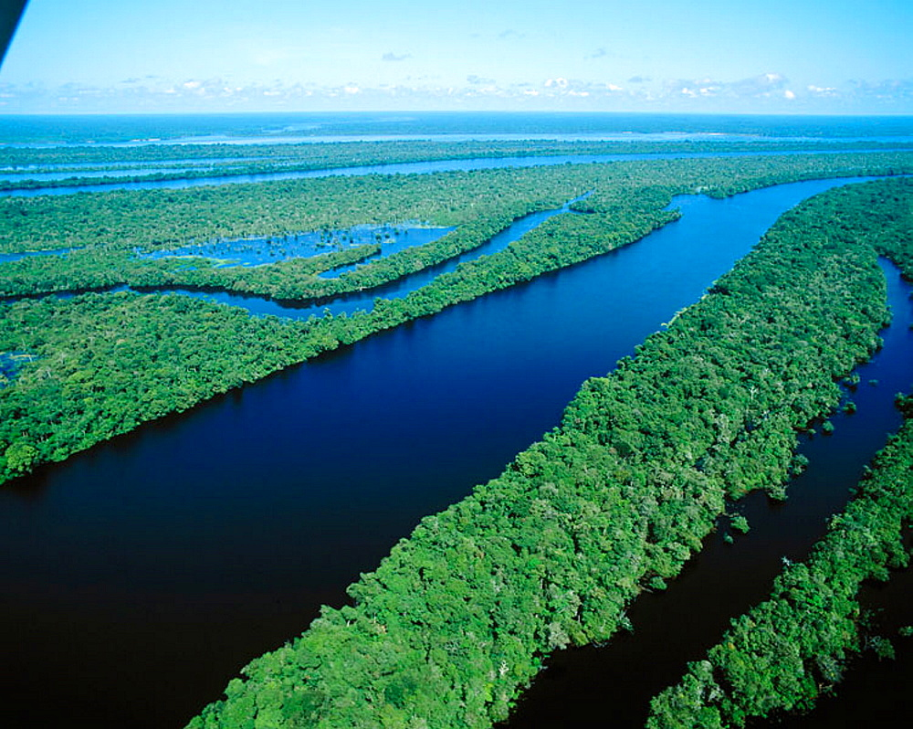 Archipelago of Anavilhanas at Amazon River, near Manaus, Brazil - 817-20389