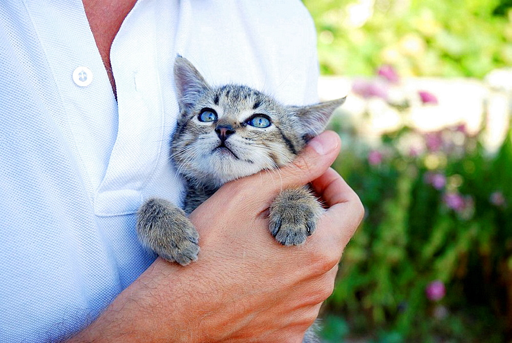 Small tabby cat in mans hand
