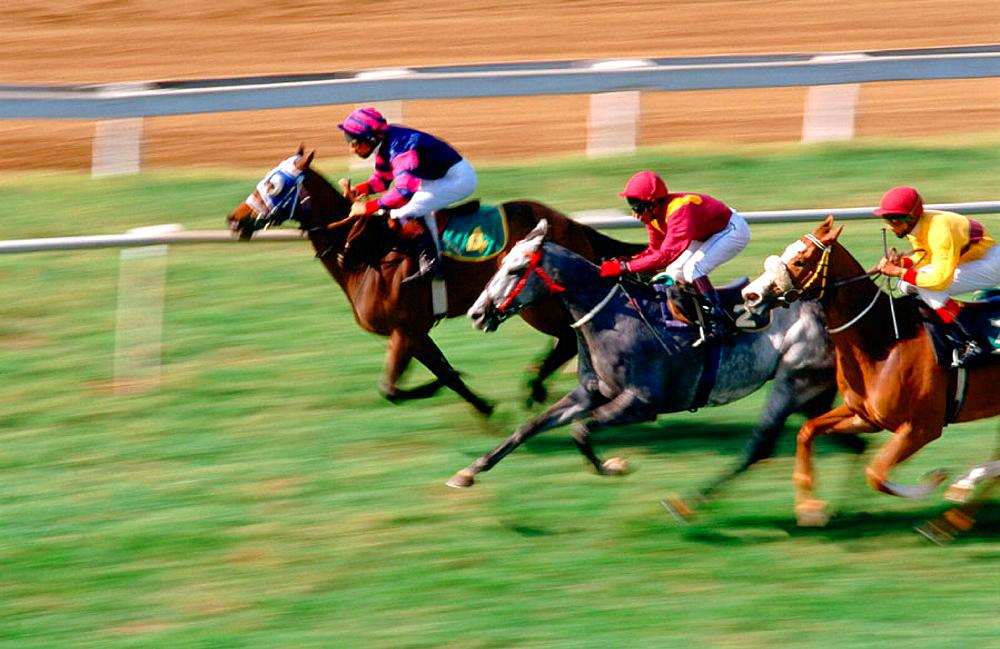Horse racing, Mahalaxmi race course, Mumbai, Bombay, Maharashtra, India