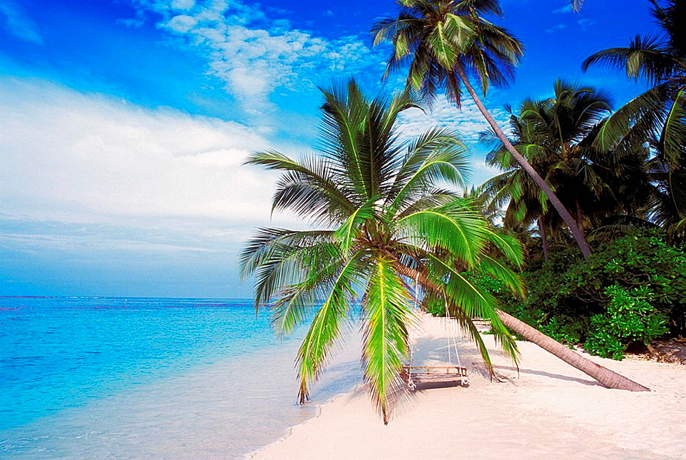 Palm Trees on Tropical Beach, Maldive Islands