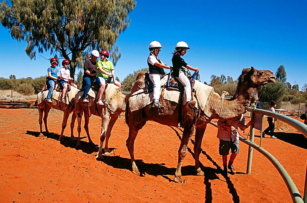 Camel train and riders, Mount Uluru, Ayers Rock, Kata Tjuta National Park, Northern Territory, Australia
