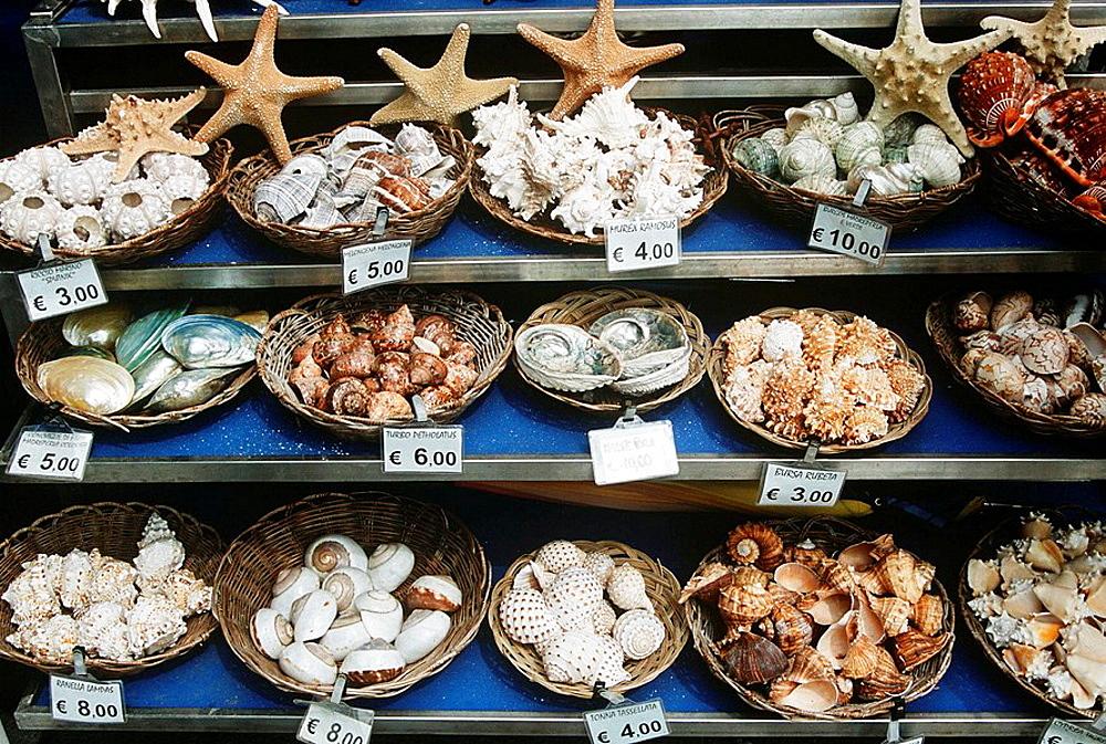 Shells for sale on shelves outside a gift shop, Venice, Italy
