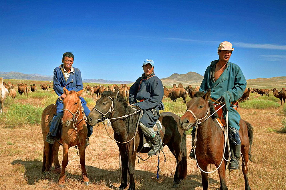 Mongolian horsemen with a herd of two-humped camels, north central Mongolia The two-humped camel is the Bactrian Camel Camelus bactrianus, native to the steppes of Mongolia No releases available