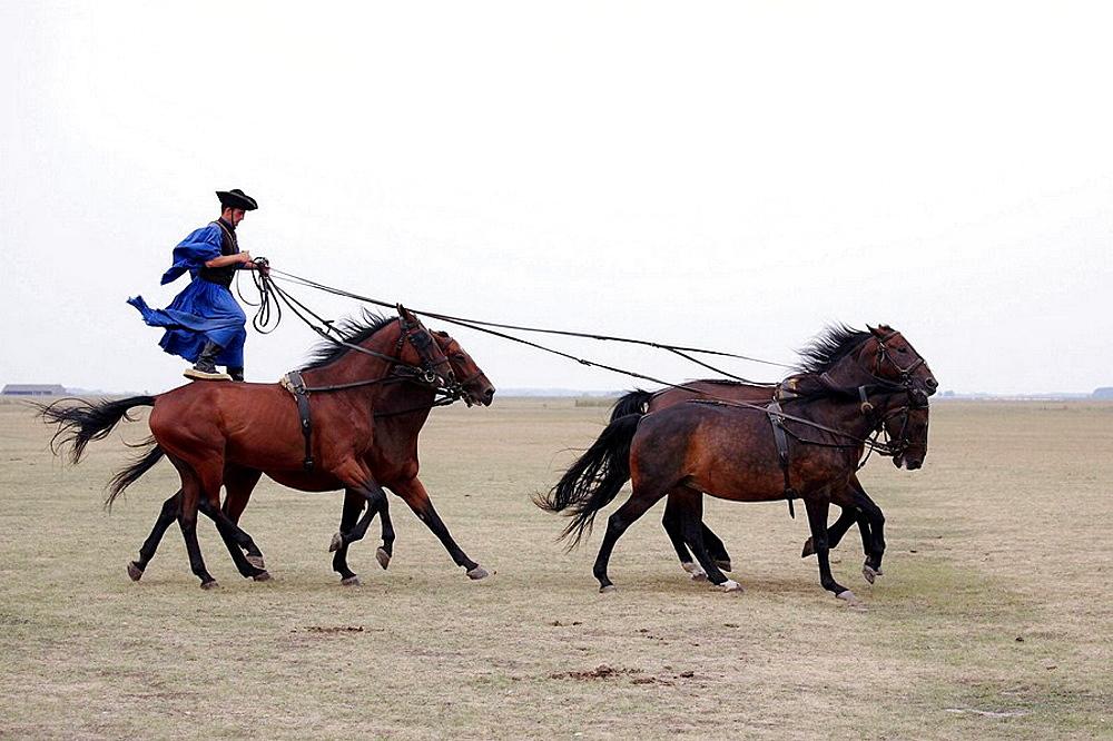 Csikos horseman five in hand horsemanship, Hortobagy, Hungary.