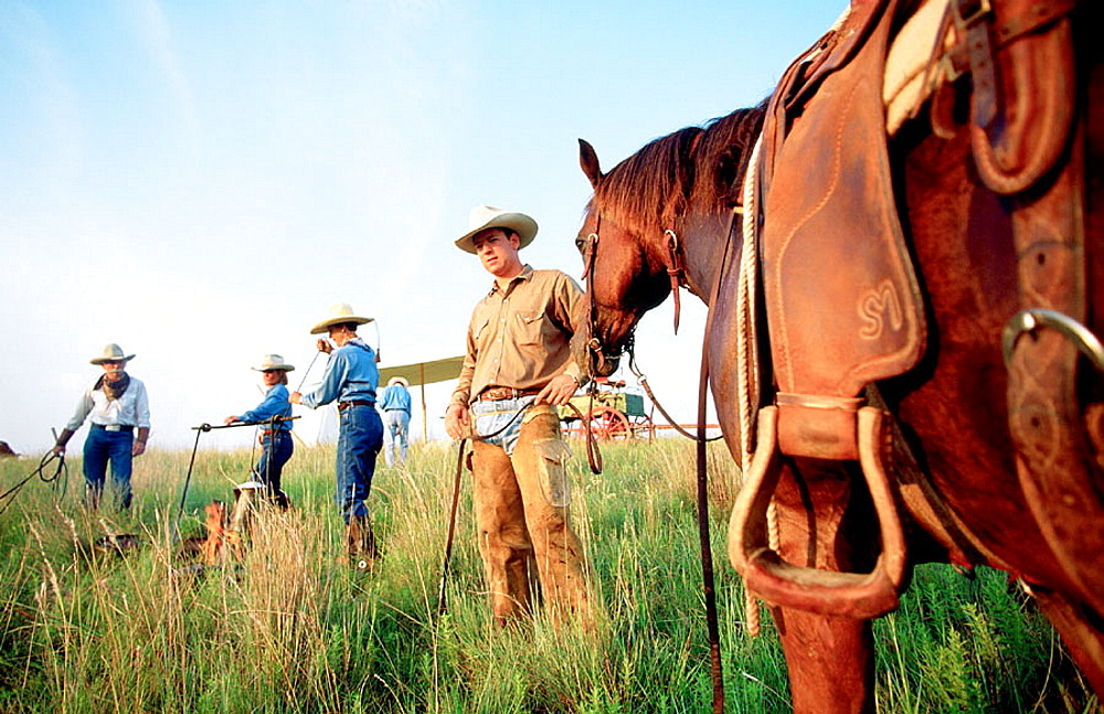 Cowboys and long horn cows herd, Fort-Worth, Texas, USA