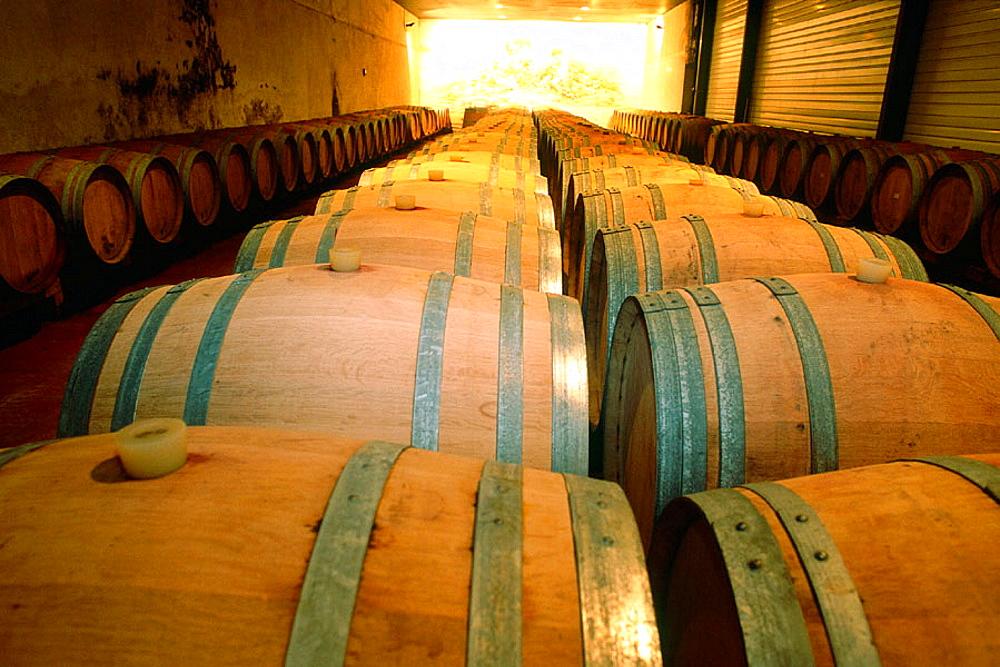Oak barrels at wine cellar, Comte Peraldi winery, Corsica Island, France