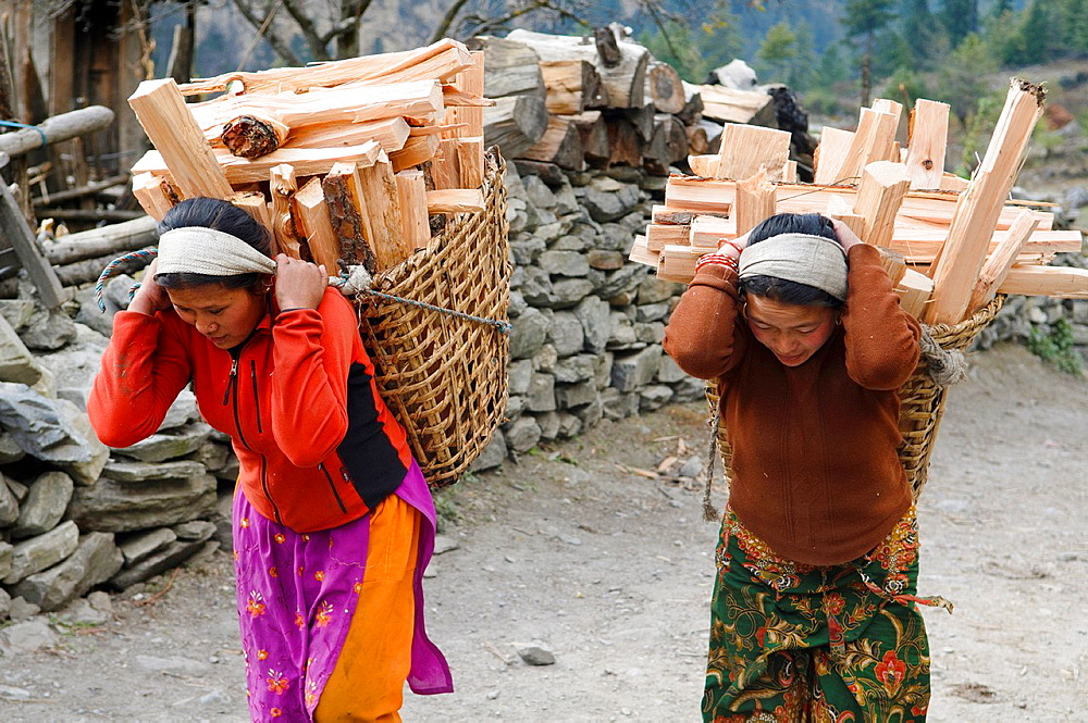 women carrying firewood in the Annapurna region of Nepal - 817-253485