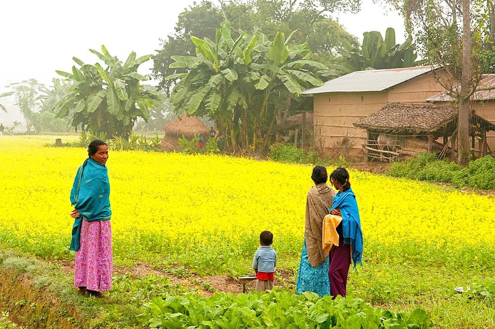 fields of mustard seed in Chitwan National Park in Nepal