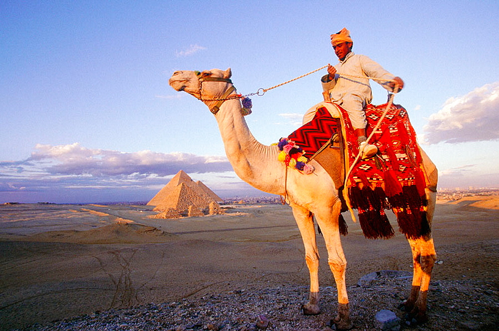 Pyramids and camel, Gizeh, Egypt