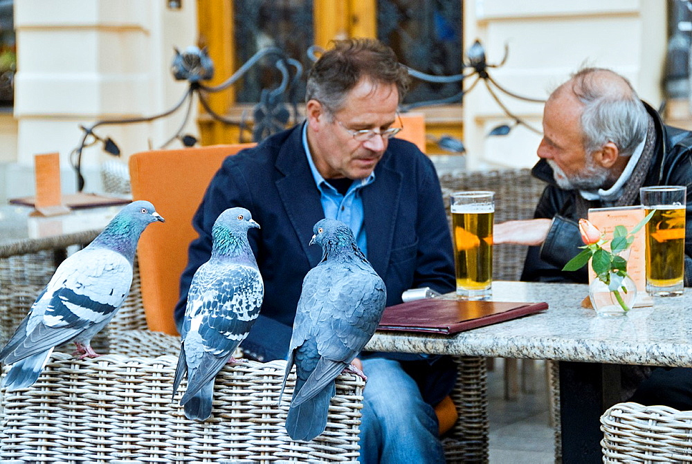 Three pigeons looking at people while they drink beer and talk in a terrace, Krakow, Poland, Europe