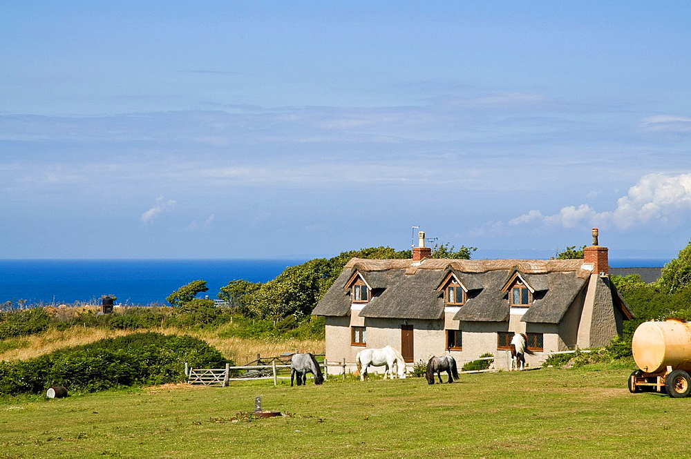 SARK SARK ISLAND Country thatched cottage and horse in field