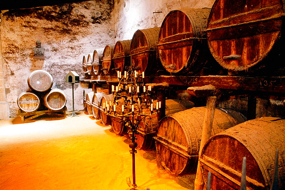 Oak barrels of sherry at wine cellar, Gonzalez Byass winery, Jerez de la Frontera, Cadiz province, Spain