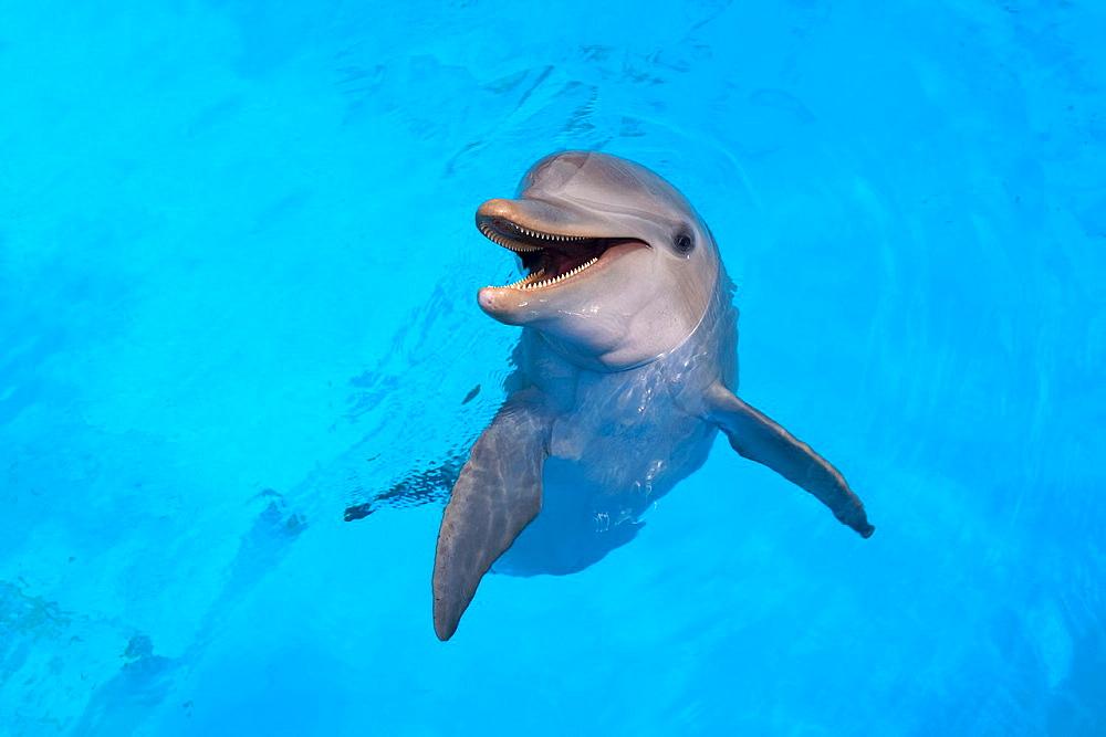 Photograph of a smiling dolphin in the water, ACUARIO NACIONAL, AV 3 AND CALLE 62, OUTER HAVANA, HAVANA, CUBA - 817-269172