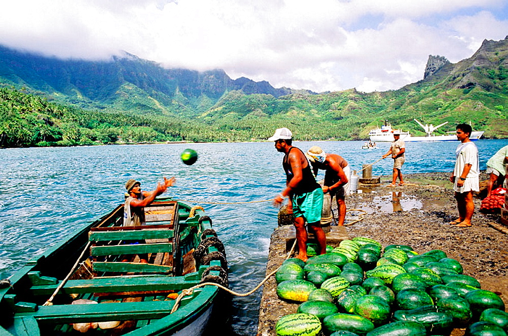 Loading watermelons for transportation to Tahiti, Freighter and liner Aranui cruise in Hiva-Oa, Marquesas archipelago, French Polynesia