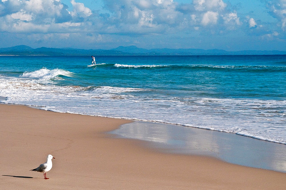 Seagull and surfer on Belongil beach, Byron Bay, NSW, Australia