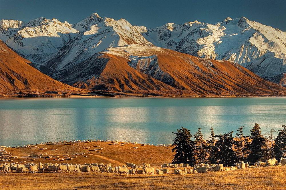 High country sheep station near Mt Cook, Lake Pukaki, Ben Ohau Range behind, Canterbury.