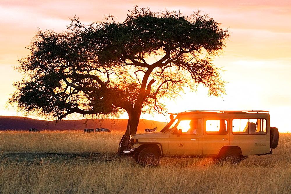 Safari vehicle in the sunset, Masai Mara National Reserve, Kenya - 817-276375