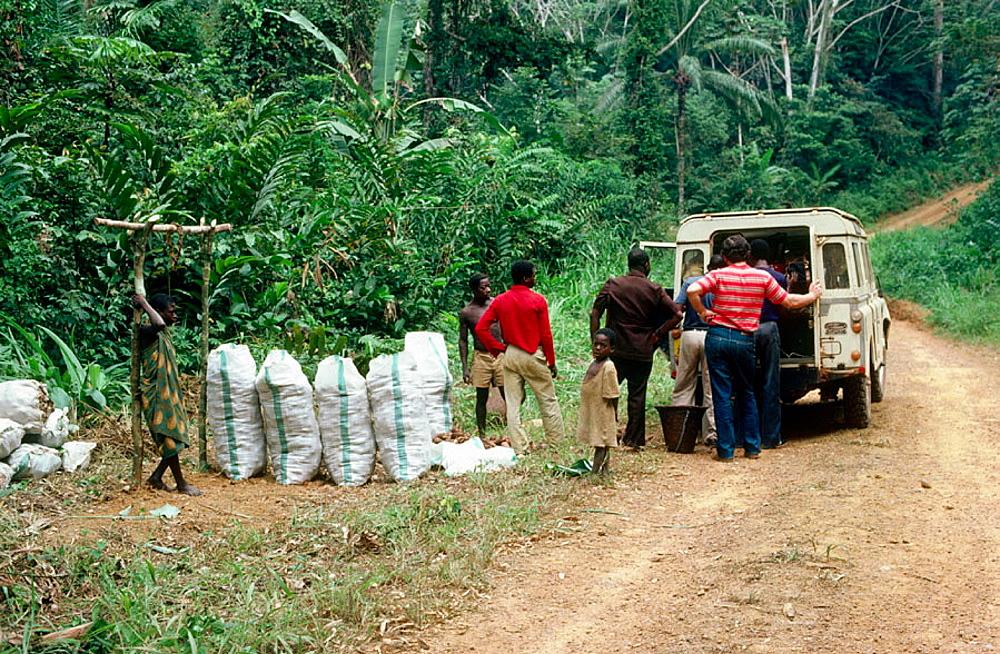 On the trail from Brazzaville to Pointe-Noire, Niari region, Republic of the Congo