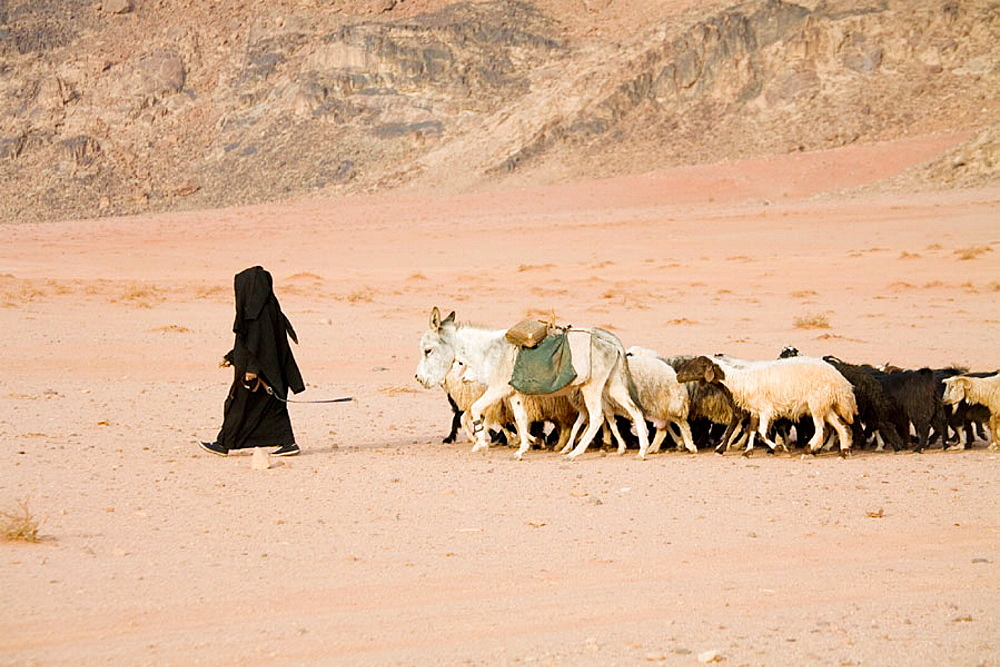Bedouin woman returning with her sheep, Wadi Rum desert, Kingdom of Jordan