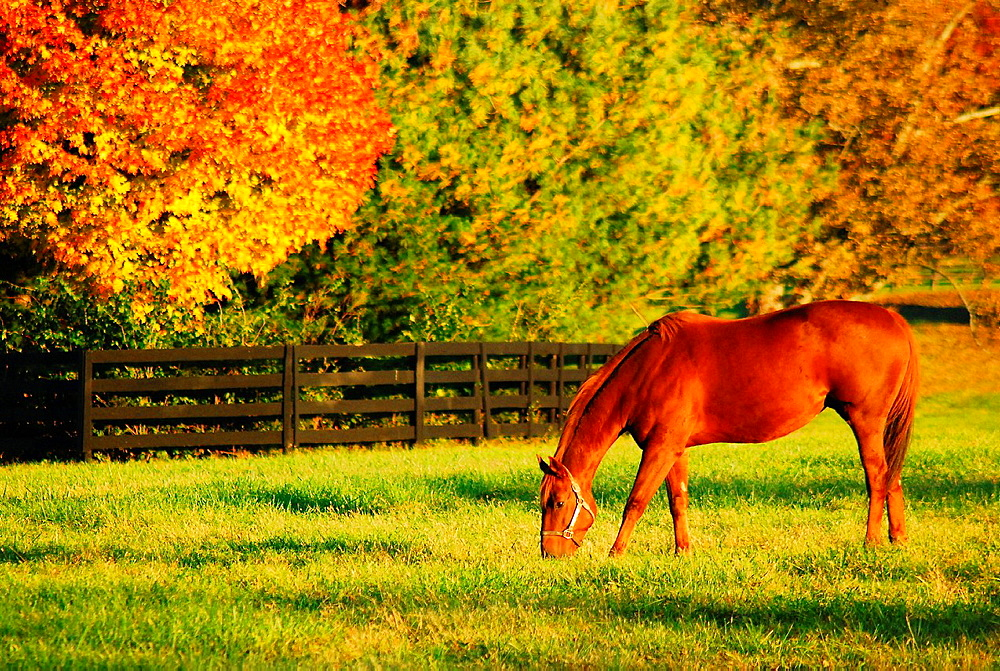 Autumn, Horse Country, Lexington, Kentucky, KY - 817-280259