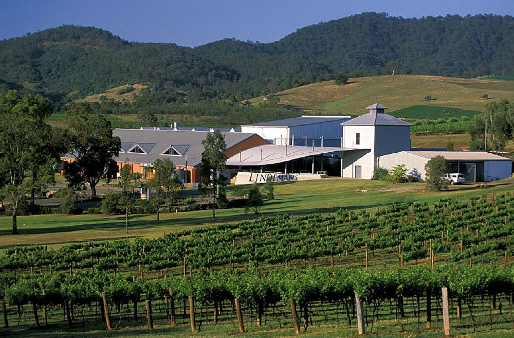 Australia, Lindemans Winery, near Cessnock, New South Wales, Lower Hunter Valley, wine, vineyard, agriculture, build. Australia, Lindemans Winery, near Cessnock, New South Wales, Lower Hunter Valley, wine, vineyard, agriculture, build