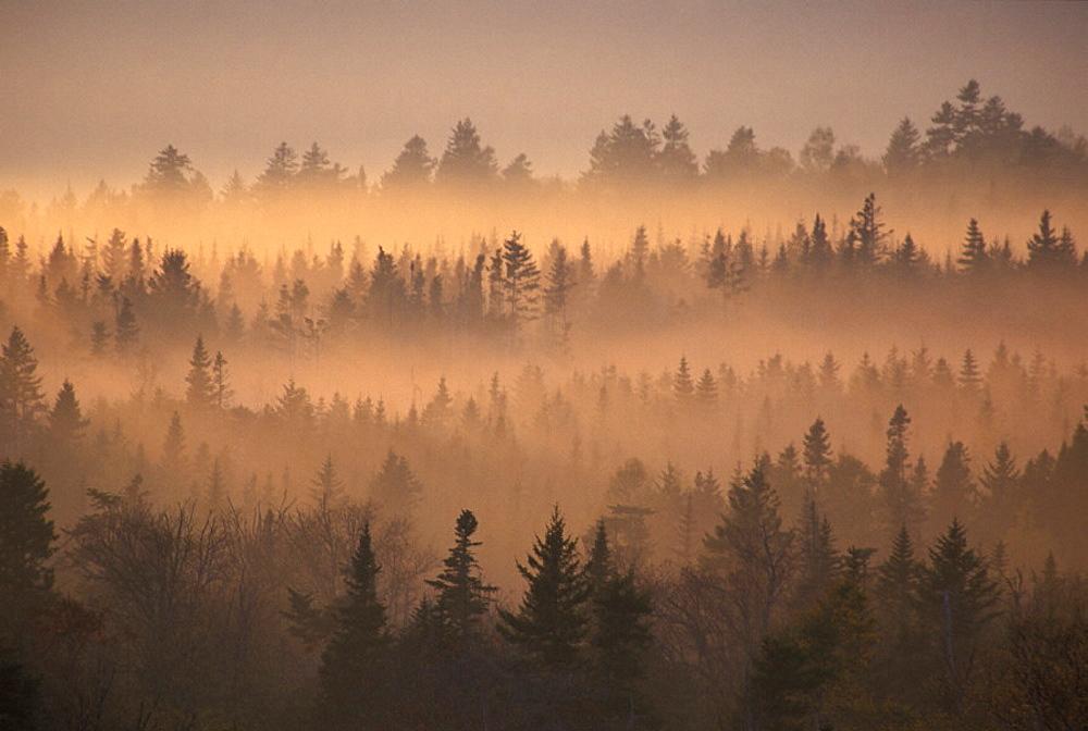 Canada, North America, America, dusk, fog, Mood, nature, New Brunswick, overview, scenery, landscape, twilight, wood. Canada, North America, America, dusk, fog, Mood, nature, New Brunswick, overview, scenery, landscape, twilight, wood