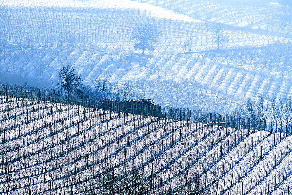 wine, vineyard, cultivation, outhouse, agriculture, series, picture series, seasons, winter, snow, scenery, landscape, . wine, vineyard, cultivation, outhouse, agriculture, series, picture series, seasons, winter, snow, scenery, landscape,  - 817-294970