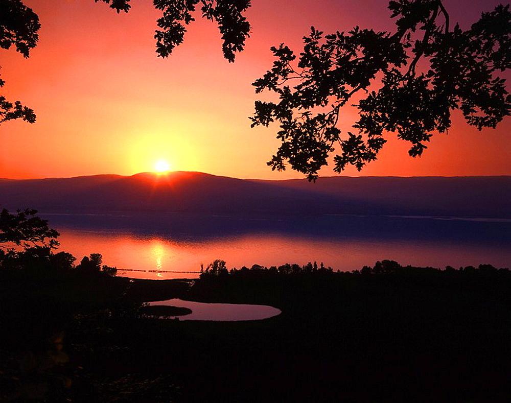 scenery, landscape, lake, shore, branches knots, silhouettes, Neuenburgersee, Lake Neuchâtel, sundown, mood, dusk, twi. scenery, landscape, lake, shore, branches knots, silhouettes, Neuenburgersee, Lake Neuchâtel, sundown, mood, dusk, twi