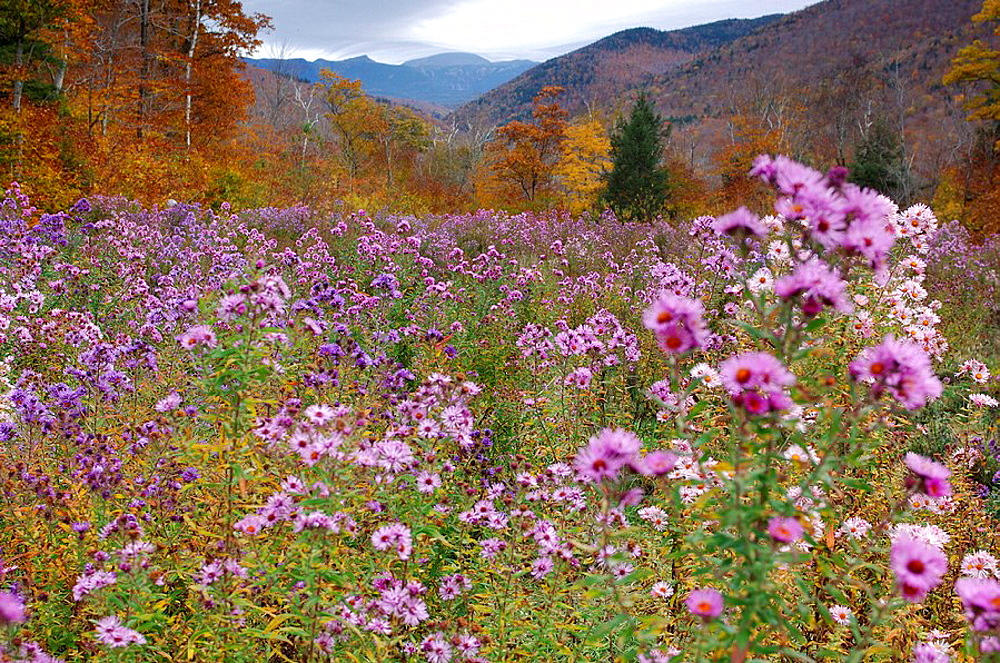 scenery, landscape, autumn, autumn scenery, flowers, flower meadow, wild flowers, wood, forest, autumn wood, deciduous. scenery, landscape, autumn, autumn scenery, flowers, flower meadow, wild flowers, wood, forest, autumn wood, deciduous