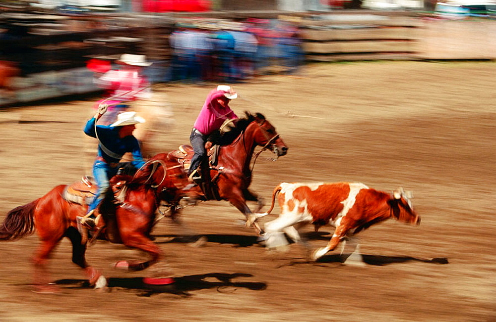 Team roping, Rodeo, Washington, USA