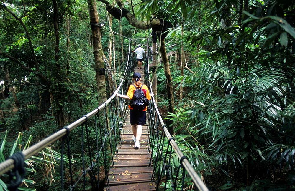 Malaysia, Langkawi island, Southeast Asia, Canopy, Tree top walk, footpath, bridge, adventure, people, nature, tourist. Malaysia, Langkawi island, Southeast Asia, Canopy, Tree top walk, footpath, bridge, adventure, people, nature, tourist