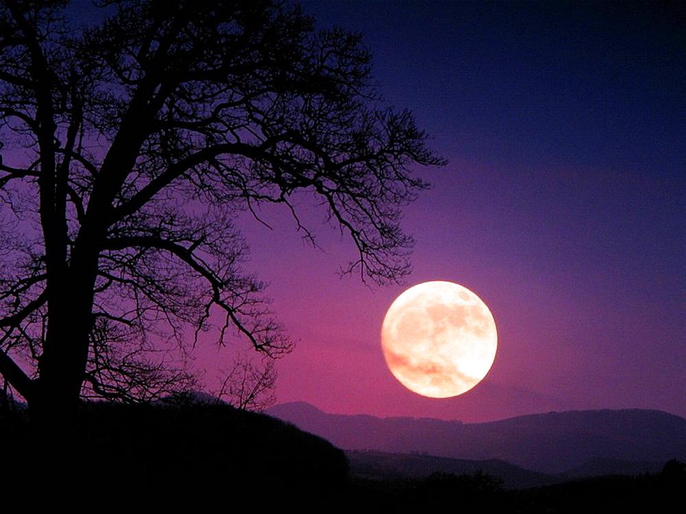 Full moon, at night, oak, tree, purple, Switzerland, Europe, canton Basel_country, scenery, landscape, sky, nature, sc. Full moon, at night, oak, tree, purple, Switzerland, Europe, canton Basel_country, scenery, landscape, sky, nature, sc