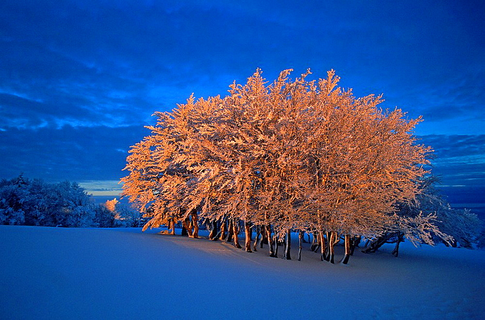 Creux du van, Switzerland, Canton of Neuchatel, group of trees, hoarfrost, frost, frost, winter, morning light, snow, Landscape, scenery, nature, dawn, scenic, trees, Jura mountains, mountain. Creux du van, Switzerland, Canton of Neuchatel, group of trees, hoarfrost, frost, frost, winter, morning light, snow, Landscape, scenery, nature, dawn, scenic, trees, Jura mountains, mountain