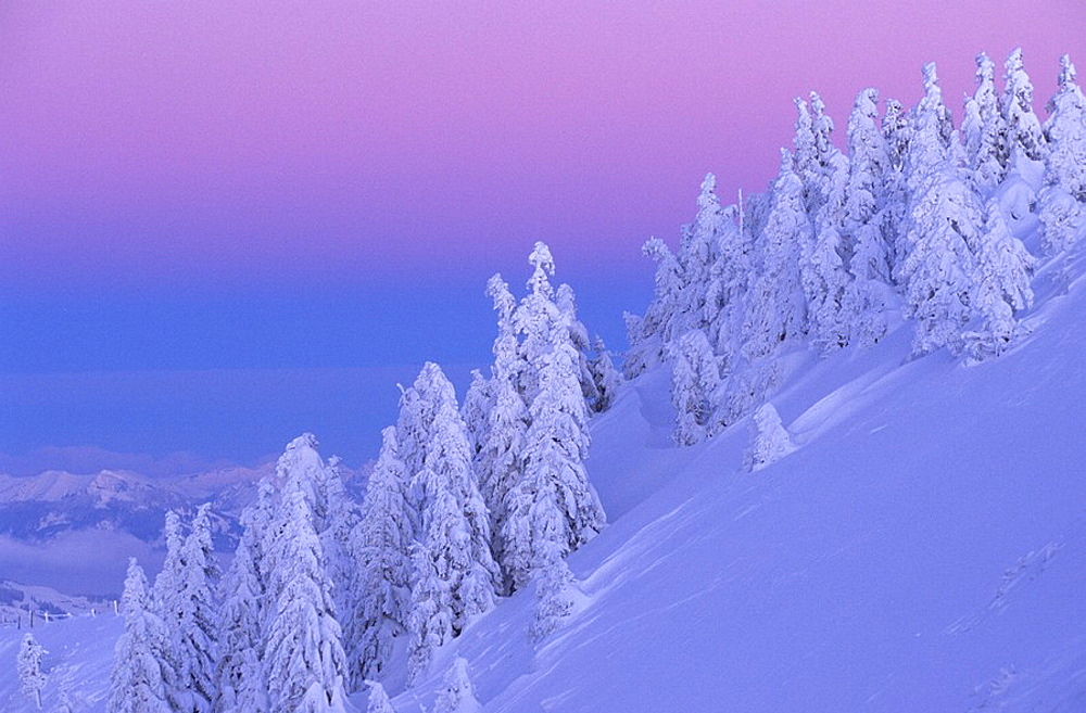 Kronberg, Switzerland, Canton of Appenzell, Innerrhoden, conifers, spruces, snow, winter, evening mood, dusk, twilight, view, Landscape, scenery, nature, scenic, trees, slope, misty, foggy, fog, mist, alpine, alps, mountain, mountains. Kronberg, Switzerland, Canton of Appenzell, Innerrhoden, conifers, spruces, snow, winter, evening mood, dusk, twilight, view, Landscape, scenery, nature, scenic, trees, slope, misty, foggy, fog, mist, alpine, alps, mountain, mountains