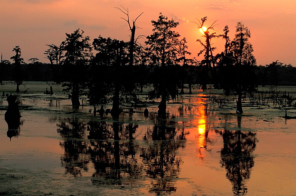 Sunset, Alligator Bayou, Baton Rouge, Louisiana, USA, North America, America, travel, nature, landscape, scenery, dusk, scenic, reflections, swamp. Sunset, Alligator Bayou, Baton Rouge, Louisiana, USA, North America, America, travel, nature, landscape, scenery, dusk, scenic, reflections, swamp