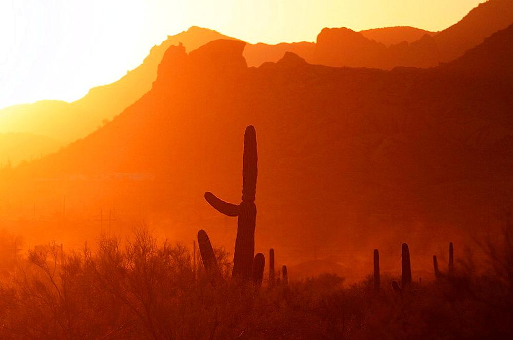 Saguaros, Cactus, Cacti, Superstition Mountains, Desert, Lost Dutchman State Park, Apache Junction, Arizona, USA, America, North America, travel, America, North America, travel, landscape, sunset, scenery, scenic, dusk. Saguaros, Cactus, Cacti, Superstition Mountains, Desert, Lost Dutchman State Park, Apache Junction, Arizona, USA, America, North America, travel, America, North America, travel, landscape, sunset, scenery, scenic, dusk