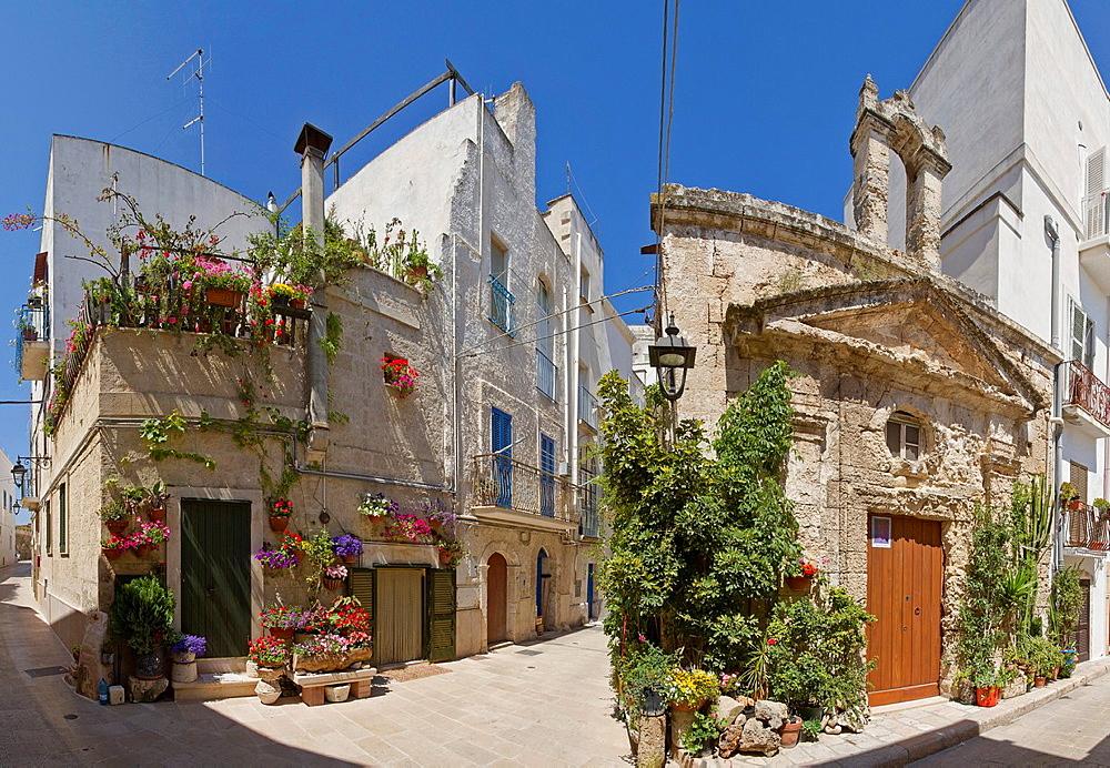 Italy, Europe, Historic centre, Monopoli, Puglia, city, village, flowers, spring, . Italy, Europe, Historic centre, Monopoli, Puglia, city, village, flowers, spring,