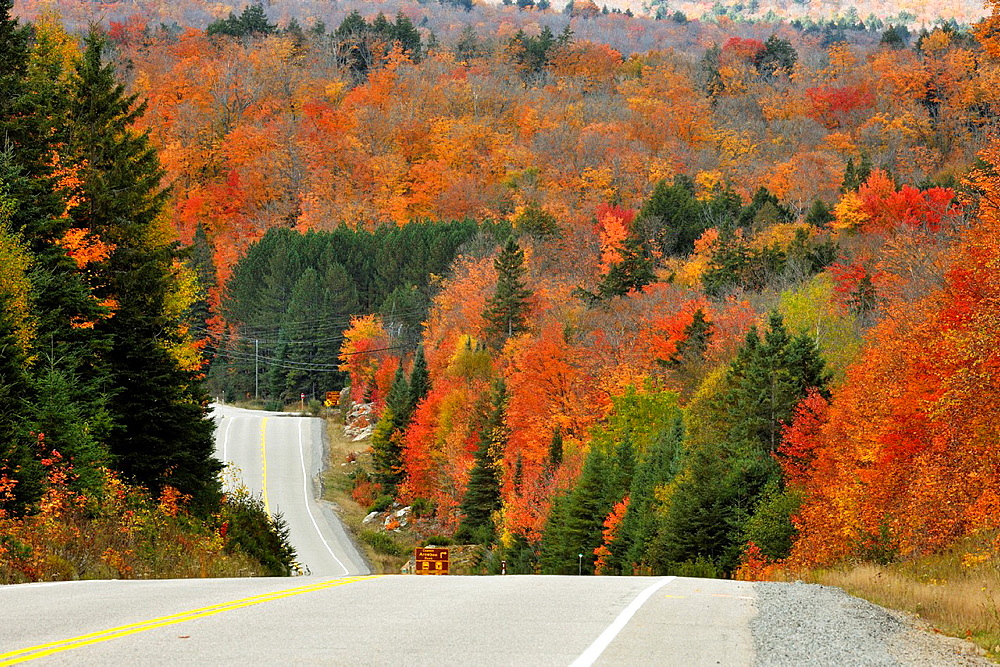 Highway 60 with autumn colour Algonquin Provincial Park, Ontario