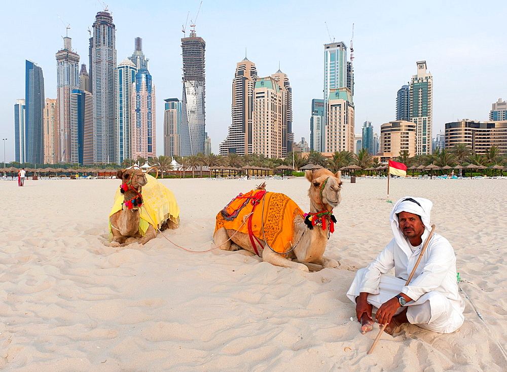 Camels on beach at Jumeirah Beach resort district with high rise buildings to rear in Dubai, United Arab Emirates, UAE